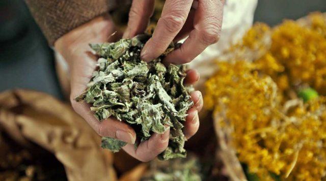Le migliori erbe officinali per l'inverno | Rosoliver